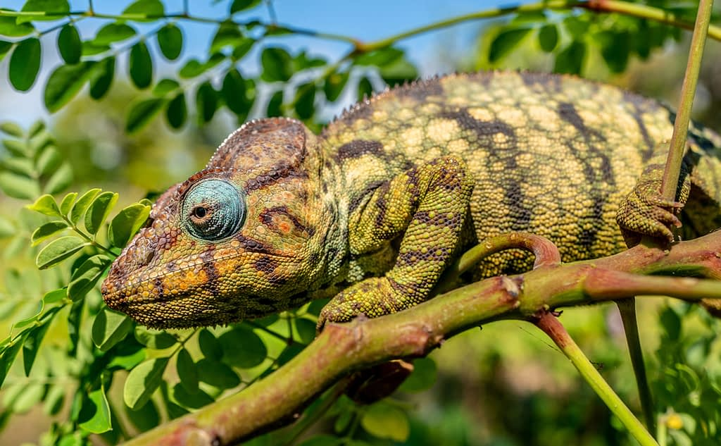 Miavana Island Madagascar